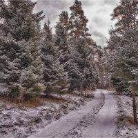 Зимняя дорога :: Дмитрий Б.
