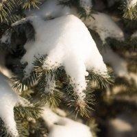 После снегопада :: Ирина Холодная
