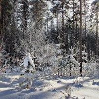 Ожидая продолжения морозов... :: Лесо-Вед (Баранов)