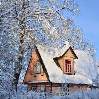 Зимние краски :: Николай Танаев