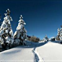 Январский пейзаж :: Leonid Rutov