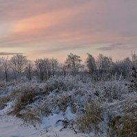 Краски нежного заката. :: владимир