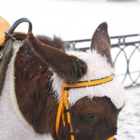 Маленький ослик тем  и хорош, что на себя он похож..... :: Tatiana Markova