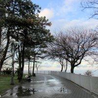 После дождя :: Нина Бутко