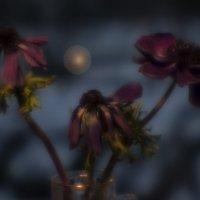 Фиолетовые сны #1 :: Анатолий Бастунский