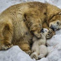 Спят усталые игрушки :: cfysx