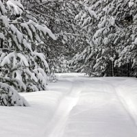 пушистый снег :: оксана
