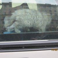 Животные Москвы :: Maikl Smit