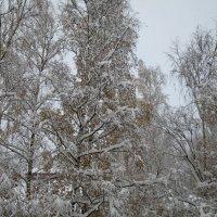 Первый снег :: novik Юрий Новиков