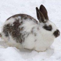 Кролик :: Александр Михайлов