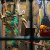 Мне купили попугая, :: Наталья (D.Nat@lia)