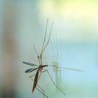 маленький комарик :: Oksana Verkhoglyad