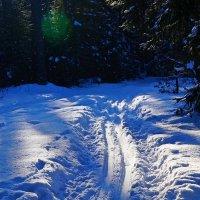Сказка зимнего леса :: Mavr -