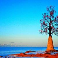 Дерево познания Добра и Зла. :: santamoroz