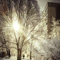 Зимнее утро. :: Василий Малыш