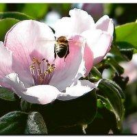 из  жизни  насекомых :: Ivana
