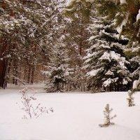 Зима . Сибирь . :: Мила Бовкун