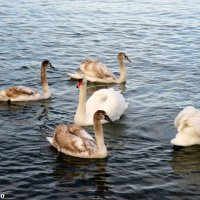 В Малой бухте Анапы :: Нина Бутко