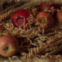 яблоки и колосья :: Светлана Горбачёва