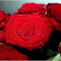 Розы в капельках :: Татьяна Пальчикова