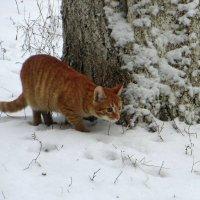 Рыжий охотник :: Татьяна Смоляниченко