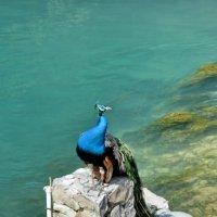 Абхазия. У Голубого озера :: Николай