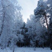 Контрасты морозного января :: Владимир Звягин
