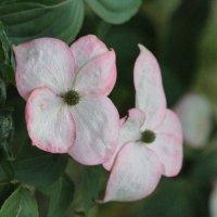 Цветы :: Inna Vicente Rivas