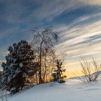 Морозный денёк :: Наталья Филипсен