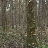 Дикий лес в ноябре :: Руслан Атаманчук