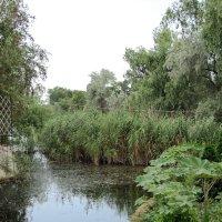 Старый пруд :: Вера Щукина