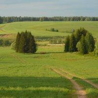 поле :: Александр Попков
