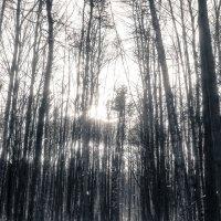 Зимний лес :: Сергей Федоткин