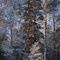 Зимы морозное цветение... :: Лесо-Вед (Баранов)