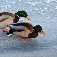 надо делиться! :: linnud