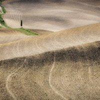 холмы Тосканы :: Алексей Mukusu