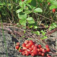 Вкусная ягода :: Leonid Rutov