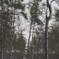 зимний :: Алина Гриб