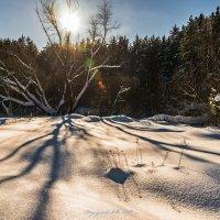 Зима в разгаре. :: Александр Тулупов