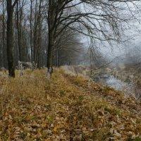 Ноябрь на Снежке :: Лариса Березуцкая