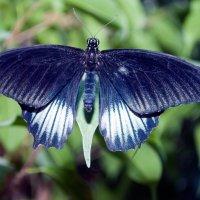 Бабочка :: Roman_Pro