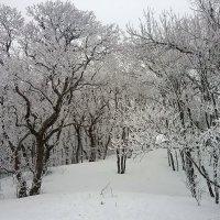 Лес на Чатырдаге :: Михаил Шабанов