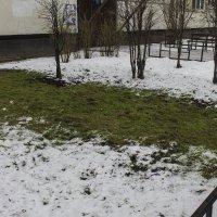 Зима? Весна?... :: Людмила Волдыкова