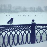 На волжской набережной Ярославля :: Николай Белавин