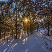 В лесной чаще :: Валерий Горбунов
