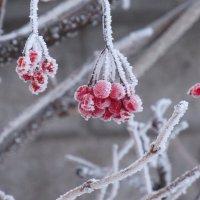 Зима :: Сергей Философ