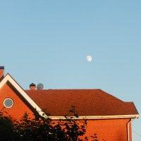 Летняя луна. :: Светлана Громова