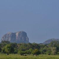 Скала-слон в национальном парке Яла. Elephant-like rock in the Yala national park. :: Юрий Воронов