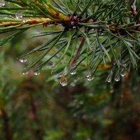 После дождя :: Андрей Кротов