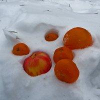 Однажды зимой :: Наталья (D.Nat@lia)